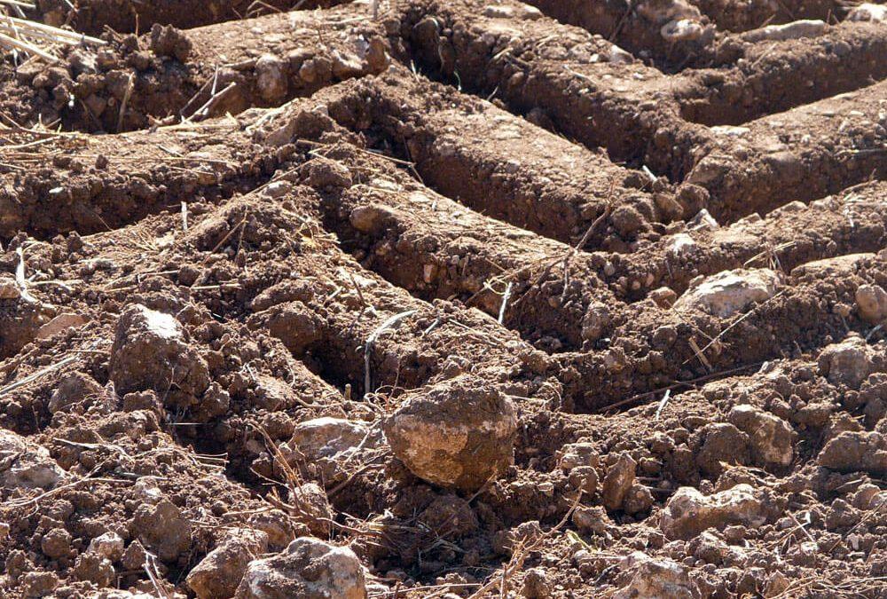 Plan de fertilización y de conservación y mejora del suelo agrícola. Finca Los Llanos (Cuenca)