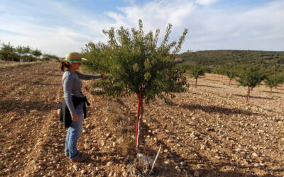 Plantación, mantenimiento y gestión de cultivar de ALMENDRO ECOLÓGICO en regadío en el TM de Zafra de Záncara (Cuenca). Año 2019.
