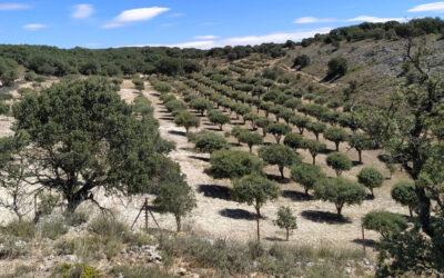 Gestión de Ayuda para la Ejecución de Plantación de Quercineas micorrizadas con TRUFA NEGRA en finca particular en Serranía de Cuenca. Año 2019-2020
